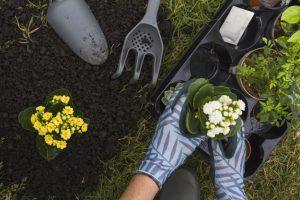 jardinero sujetando planta para ser plantada.